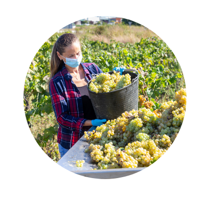 Agriculture worker wearing face mask and gloves while loading produce